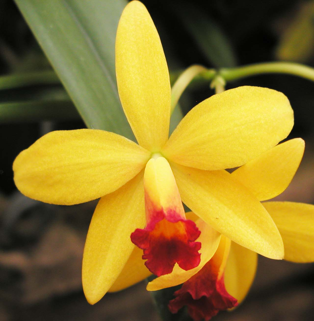 Diagnosing And Solving Orchid Problems How Orchids Rebloom