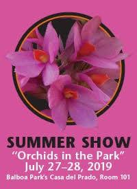 Sdos Summer Show 2019