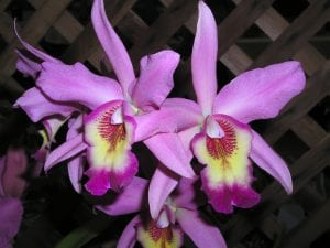 Photos from the San Diego County Orchid Society Fall Show 2019
